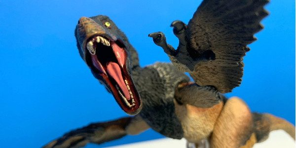 Velociraptor is a genus of dromaeosaurid theropod dinosaur that lived approximately 75 to 71 million years ago during the latter part of the Cretaceous Period. History with action figure style […]